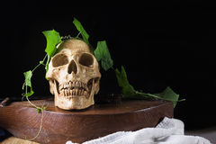 Skull with green leaf on old wood musical instrument still life Royalty Free Stock Photography