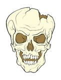 The skull of a grinning vampire. Vector color illustration of a Royalty Free Stock Photo
