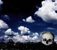 Skull on the ground Stock Photo