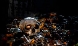 Skull on the ground surrounded by leaves royalty free stock photos
