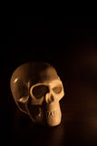 Skull, halloween background. Skull isolated on black, halloween background royalty free stock photo