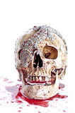 Skull  Haloween. On a white background Royalty Free Stock Image