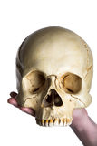Skull on the hand. Isolated on white Royalty Free Stock Photos