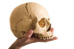Skull on the hand Royalty Free Stock Photo