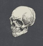 Skull. Hand drawn. Vector. Royalty Free Stock Photography
