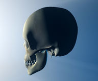 Skull head anatomy Stock Photo