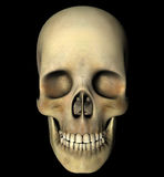 Skull head anatomy Royalty Free Stock Image