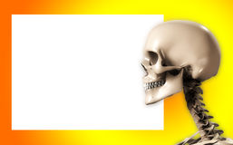 Skull Head With Blank Sign. Skull with a blank customisable sign Royalty Free Stock Images