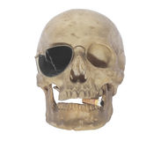 Skull head. Stock Photos