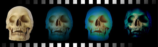 Skull head. Royalty Free Stock Images