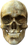 Skull head one side Royalty Free Stock Images