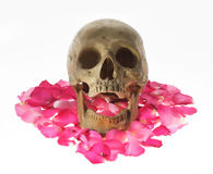 Skull head and rose petals. Stock Images