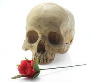 Skull head and rose. Royalty Free Stock Photography
