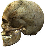 Skull head side Royalty Free Stock Photography