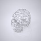 Skull - Head Royalty Free Stock Photo