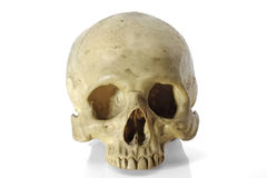 Skull head. Stock Images