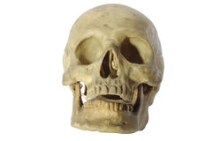 Skull head. Stock Photography