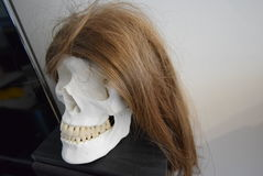 Skull head with a wig Royalty Free Stock Images