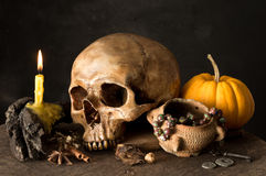 Skull and herb Royalty Free Stock Photo