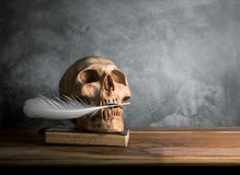 Skull hold plume in the mouth on wooden table with cement wall b Royalty Free Stock Photos