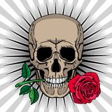 Skull holding a rose in his mouth Stock Image