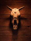 Skull with horns of an artiodactyl animal Royalty Free Stock Images