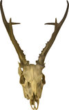Skull with horns isolated on white Stock Image
