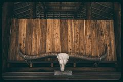 The skull with horns on the wooden background. royalty free stock photo