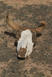 Skull of Horse and Cow Stock Photo
