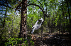 Skull of a horse on a tree. Stock Photo