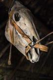 Skull horses Stock Photography