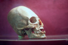 Skull of human being on purple background Stock Photo