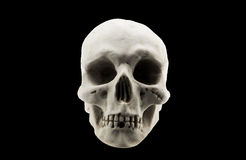 Skull. Human skull in a black background royalty free stock images