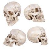 Skull Royalty Free Stock Photography