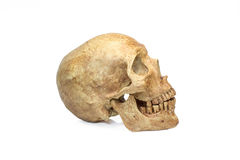 Skull human halloween isolated on white background Royalty Free Stock Photo