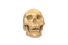 Skull human halloween isolated on white background Royalty Free Stock Photography