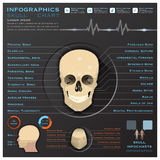 Skull Human Head Medical Infographic Infochart Stock Photos