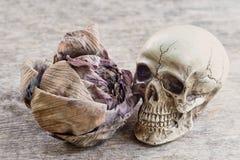 Skull human model Royalty Free Stock Image