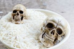 Skull human model Stock Image