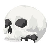 Skull. Human skull in shades of gray Stock Photography