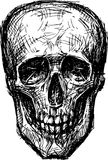 Skull of a human Royalty Free Stock Images