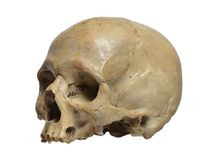 Skull of the human. On a white background Royalty Free Stock Photography