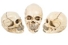 Skull of human Stock Photos