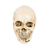 Skull of human Royalty Free Stock Image