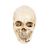 Skull of human Royalty Free Stock Image