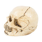 Skull of human Stock Photography