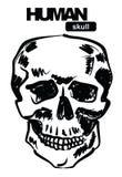 Skull icon Royalty Free Stock Photography