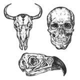 Skull Icon Set Stock Photo