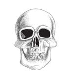 Skull  illustration. Isolated on white. Stock Image