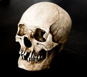 Skull with incredible detail and lighting stock photo